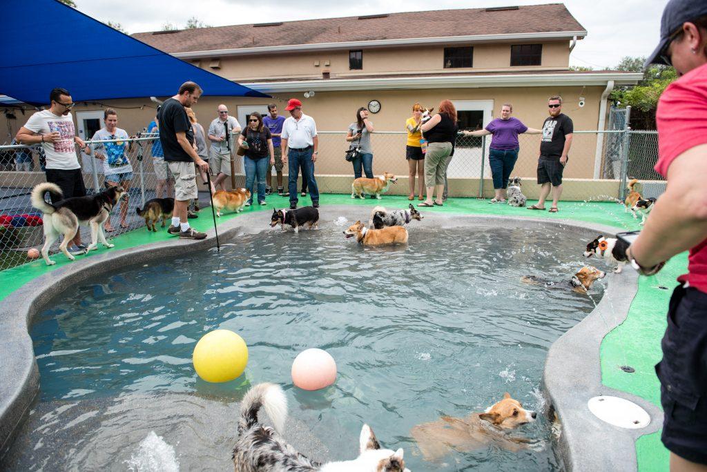 Puppy Pool Party Dogs Corgis | Carter the Corgi Birthday Party Baseball Theme Orlando Canine Country Club Anna Christine Events Cute