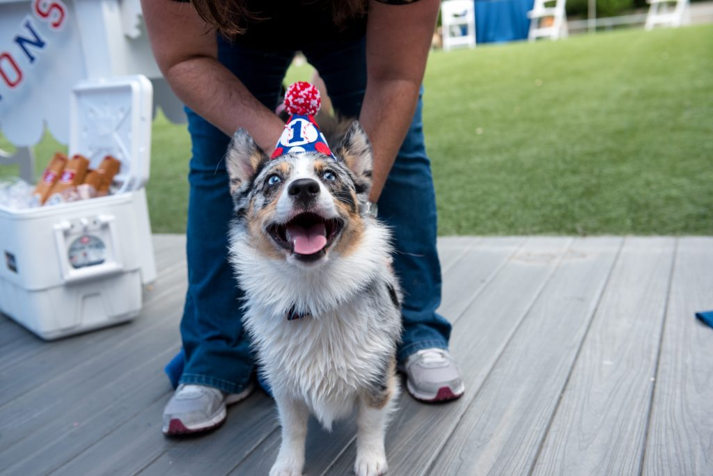 Carter the Corgi Birthday Party Baseball Theme Orlando Canine Country Club Anna Christine Events Cute