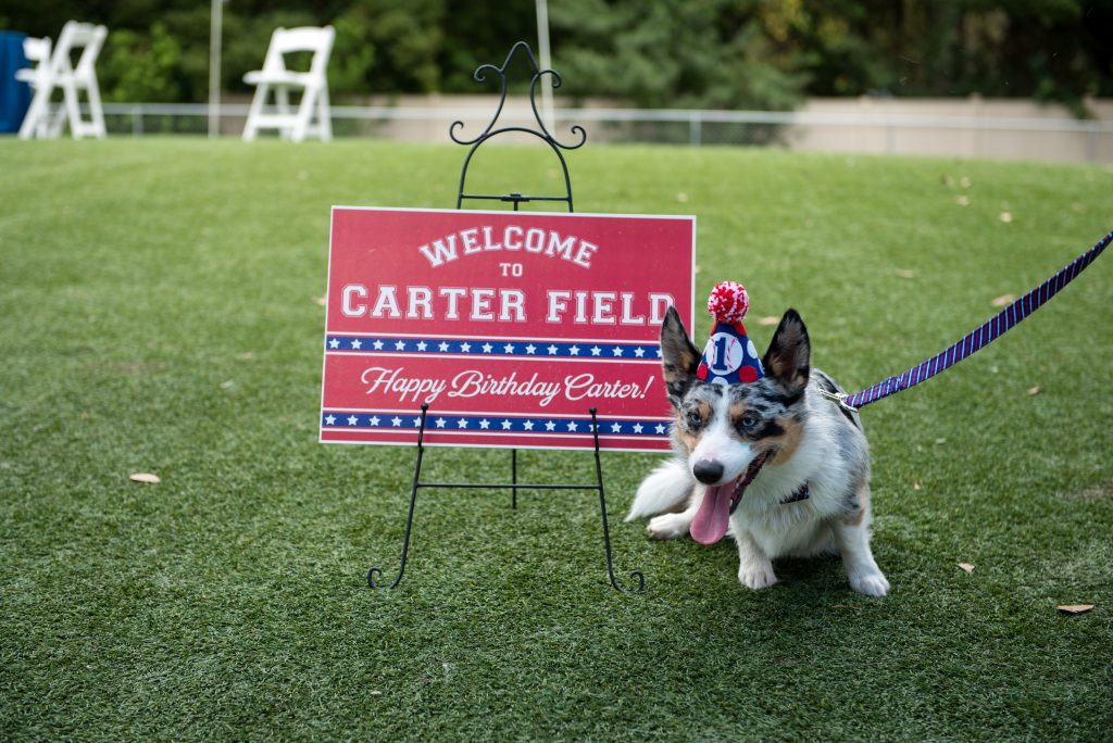 Carter the Corgi Birthday Party Baseball Theme Orlando Canine Country Club Anna Christine Events Cute